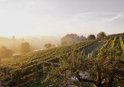 Weingarten Sonne