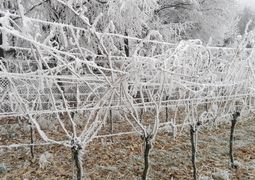 Weingarten winter